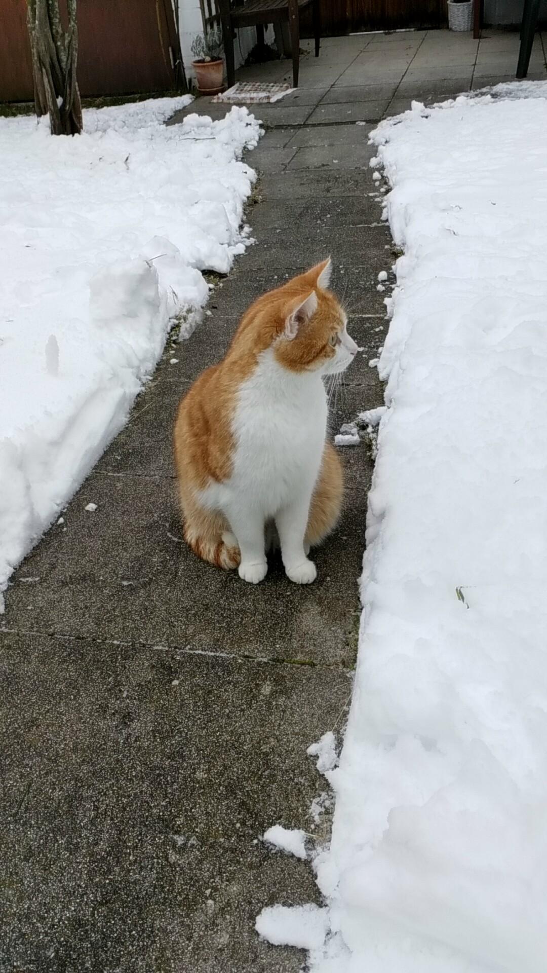 Leo-im-Schnee