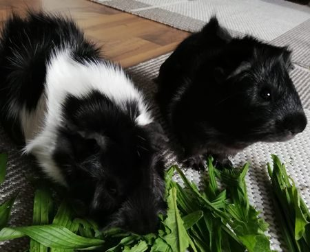 Fritzi und Maxi