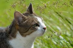 Newsletter-Umgang-mit-fremden-Katzen